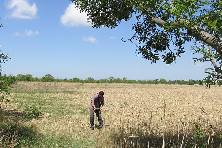 Carottage de sol à l'aide d'une tarière à main pour l'évaluation pédologique de l'habitat.