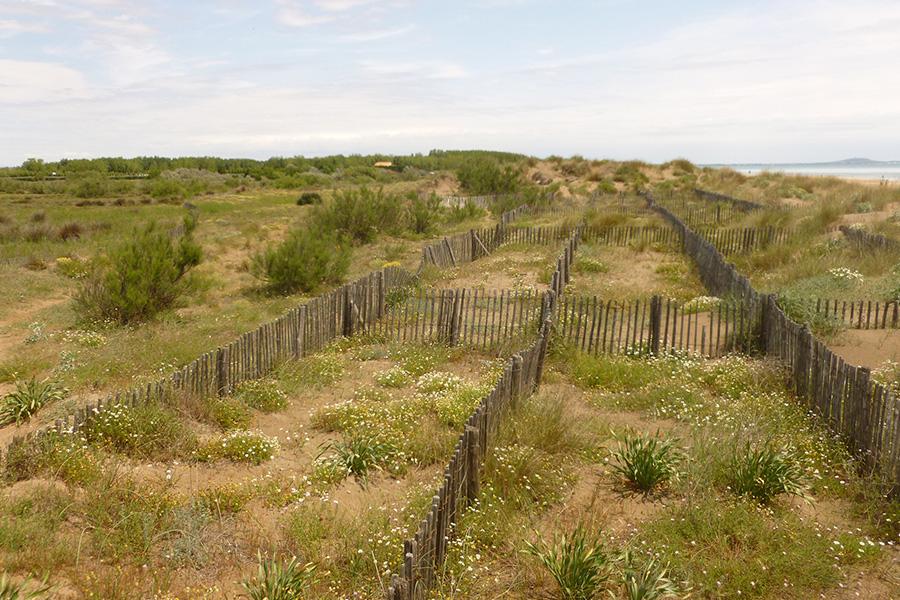 Une méthode de gestion éprouvée lorsque les conditions s'y prêtent (apports de sables marins) : la mise en place de ganivelles permettant de reconstituer un cordon de dune vive.