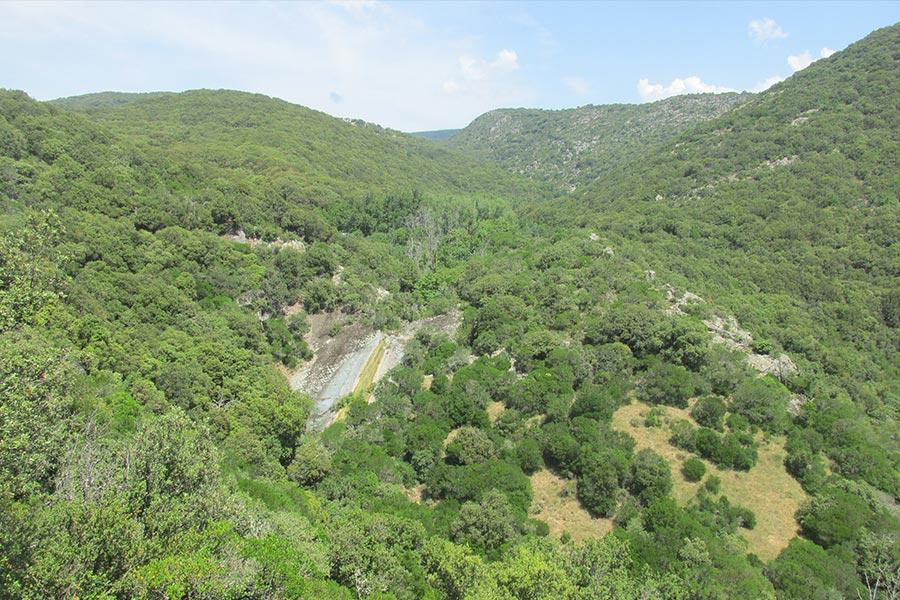 Forêt de chênes verts dans le Haut-Languedoc (Habitat Natura 2000 : 9340)