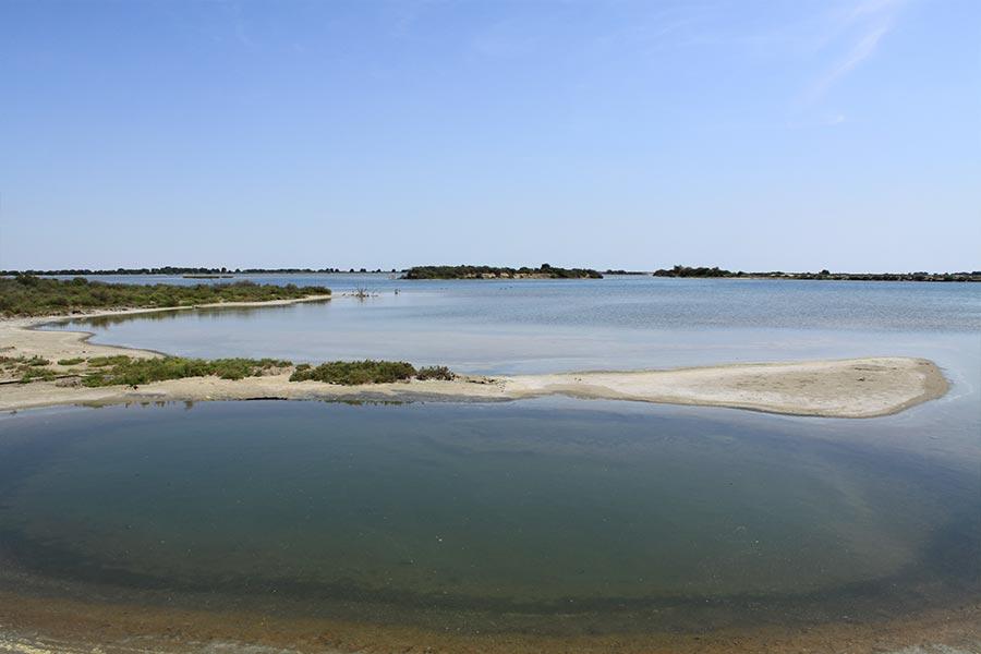 Lagune méditerranéenne (Habitat Natura 2000 : 1150) en Petite Camargue.