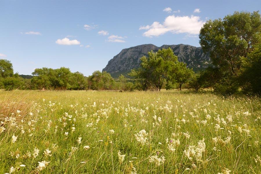 Prairie de fauche méso-hygrophile à Filipendule commune (Habitat Natura 2000 : 6510) dans la région des Garrigues.
