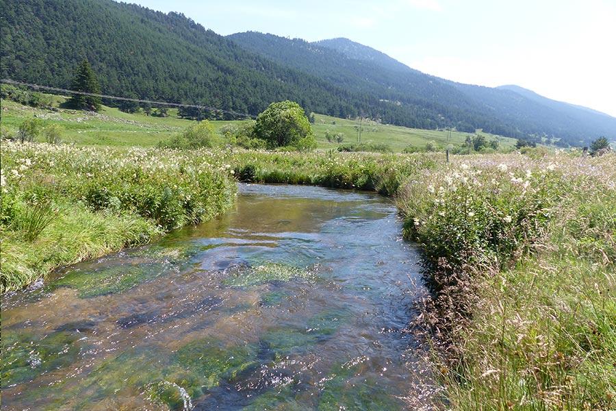 Le fleuve Aude et sa végétation aquatique rhéophile (Habitat Natura 2000 : 3260) dans le Capcir.