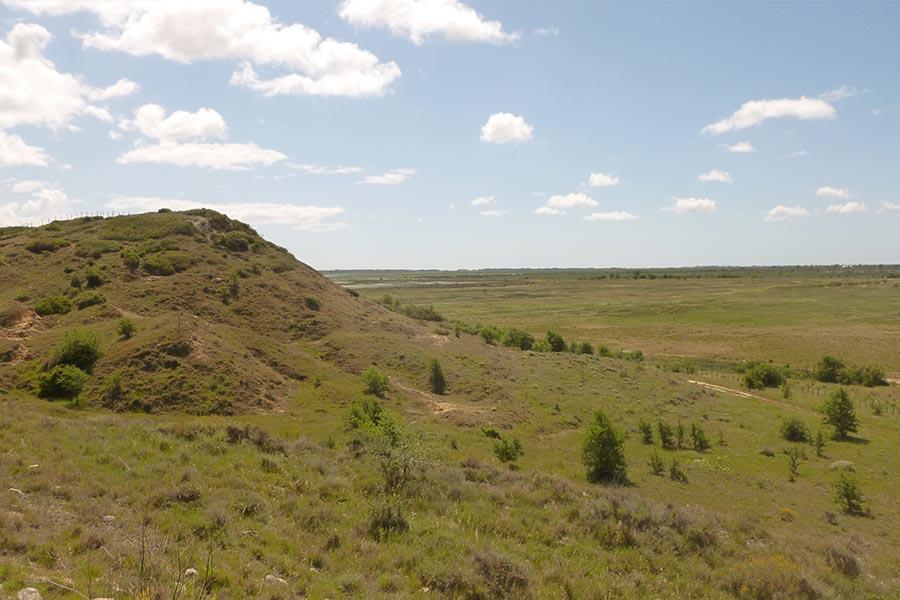 Pelouse sèche méditerranéenne à Brachypode rameux (Habitat Natura 2000 : 6220) dans la région de Béziers.