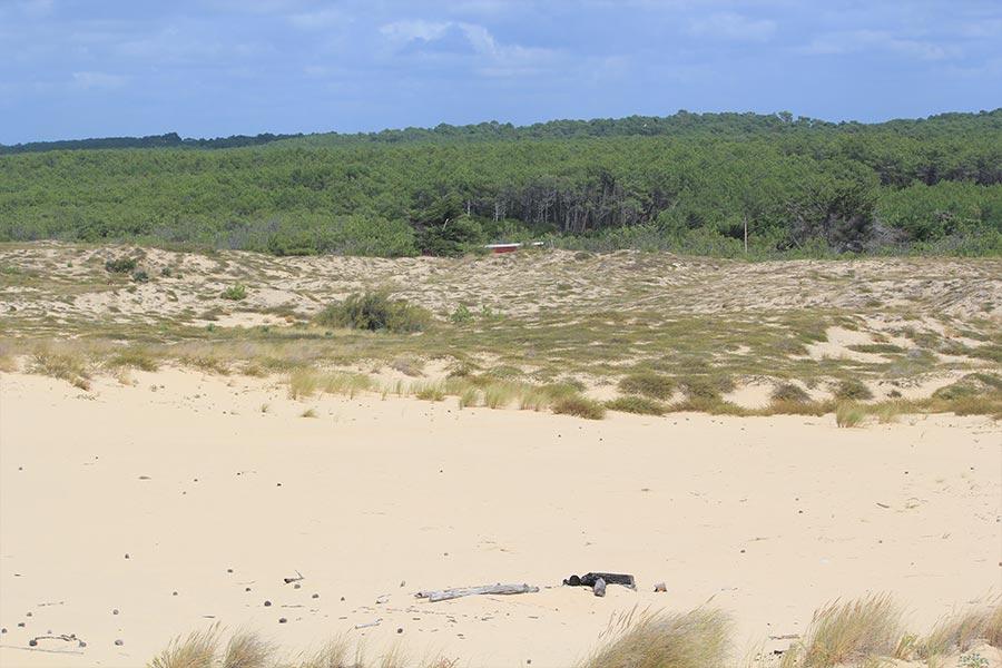 Dunes vives (Habitat Natura 2000 : 2120) sur la côte atlantique.