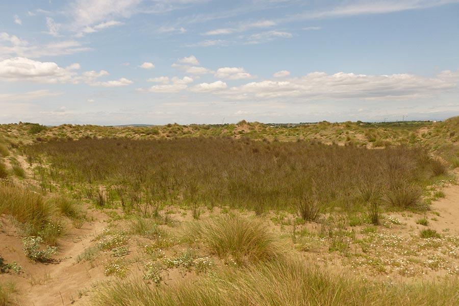 Pré salé (Habitat Natura 2000 : 1410) entouré de dunes vives (Habitat Natura 2000 : 2120) sur la côte languedocienne. Les littoraux possèdent une mosaïque d'habitats élémentaires très riche.