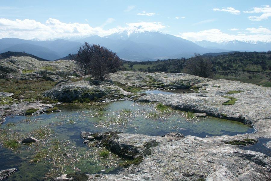 mare temporaire méditerranéenne, habitat caractéristique de zone humide.