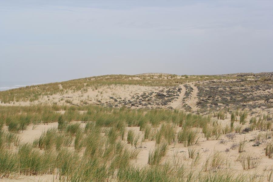 en zone peu fréquentée et plus vaste, la « non intervention » s'impose et permet de préserver un paysage plus agréable, sans barrières (Atlantique).
