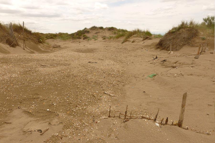 la mer reprend parfois ses droits lors de tempêtes hivernales en créant des brèches au sein des cordons littoraux appelées « grau » en Languedoc. Ces phénomènes ne sont pas forcément néfastes pour la biodiversité (c'est souvent l'inverse) ni pour la sécurité des personnes (à évaluer au cas par cas).