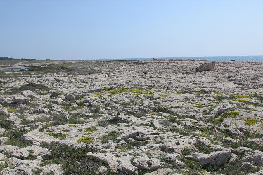 Dalle à Saladelle menue et Lotier de Crète (Habitat Natura 2000 : 1240) sur le littoral provençal.