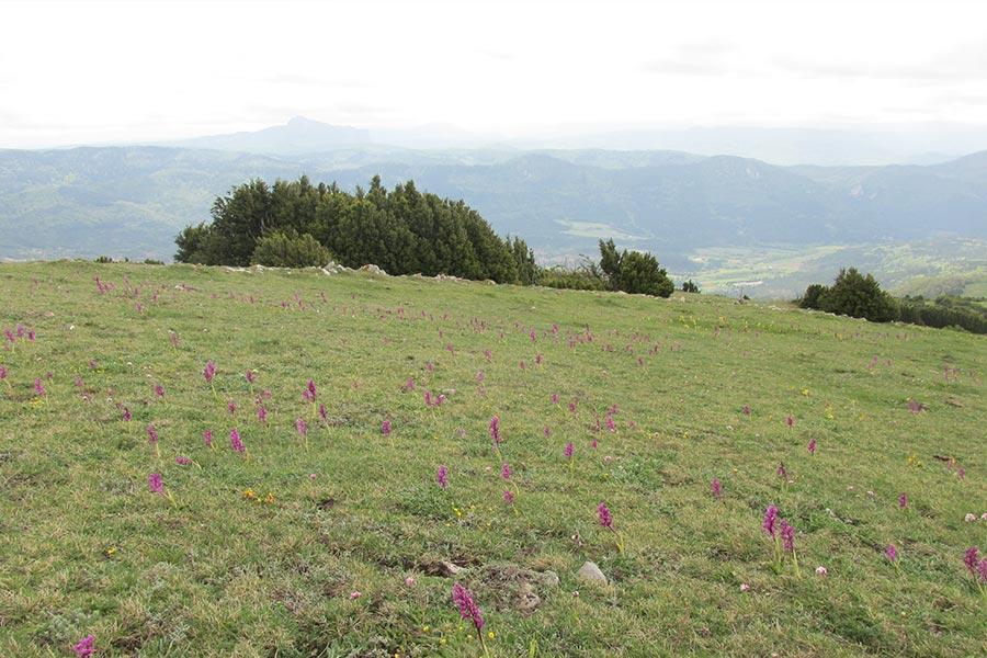 Pelouse sèche à orchidées (Habitat Natura 2000 : 6210) dans les Corbières occidentales.