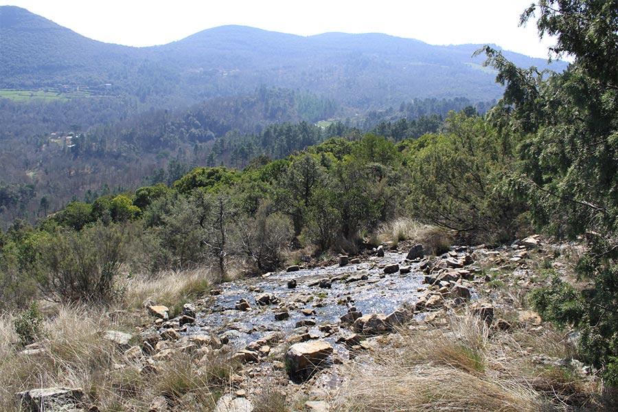 Dalle suintante à Isoète de Durieu (Habitat Natura 2000 : 3170) dans les Cévennes.